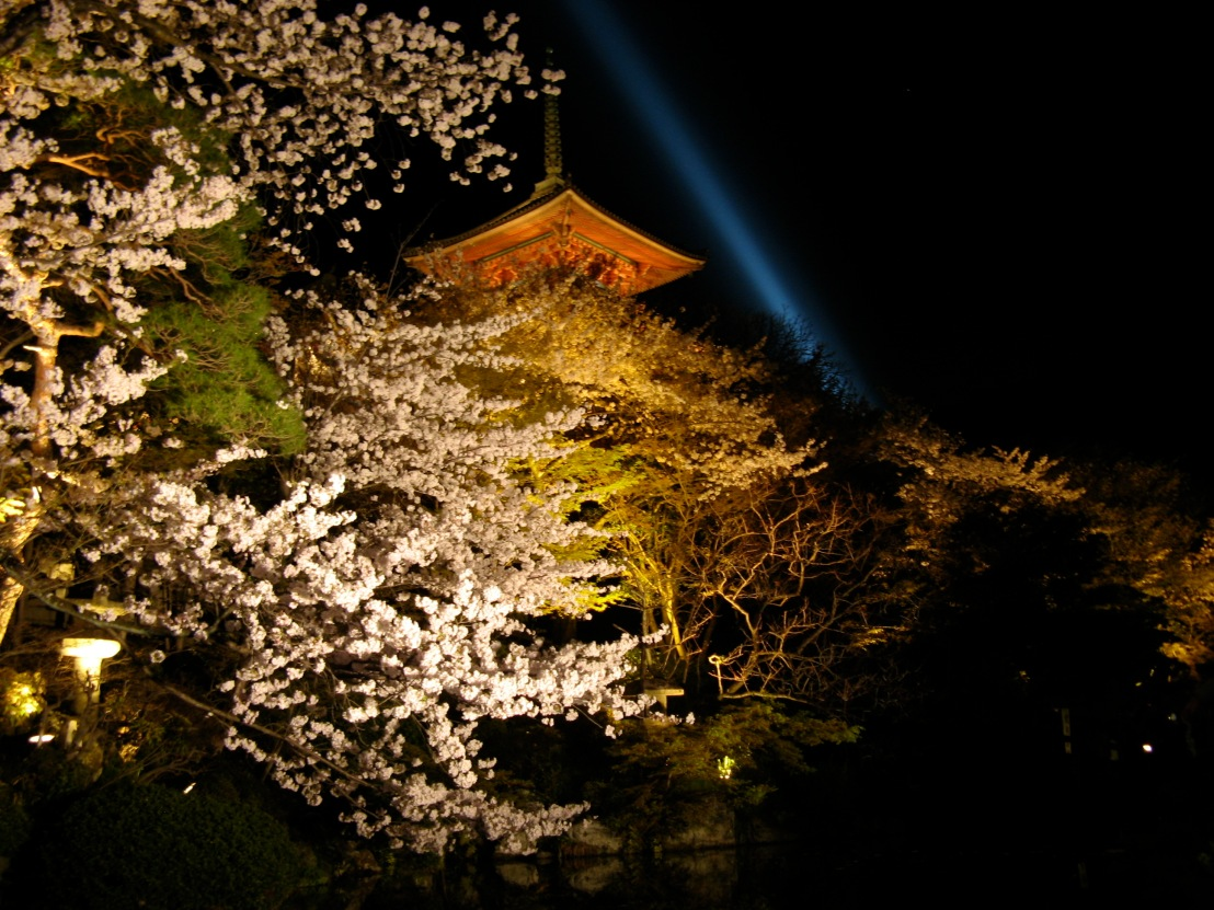 Cherry Blossom Viewing at night.