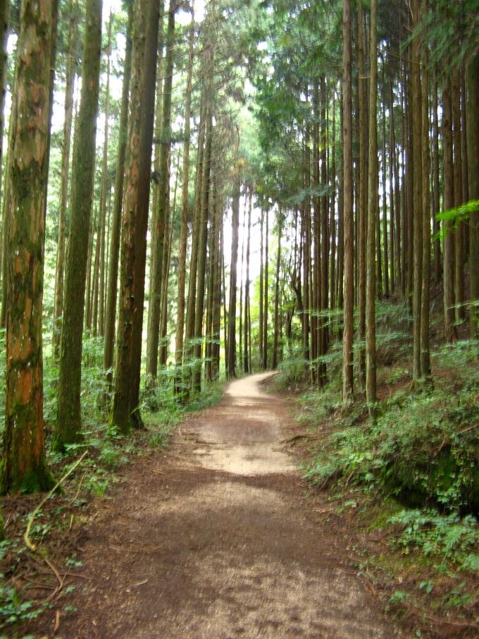 Forest Nakasendo