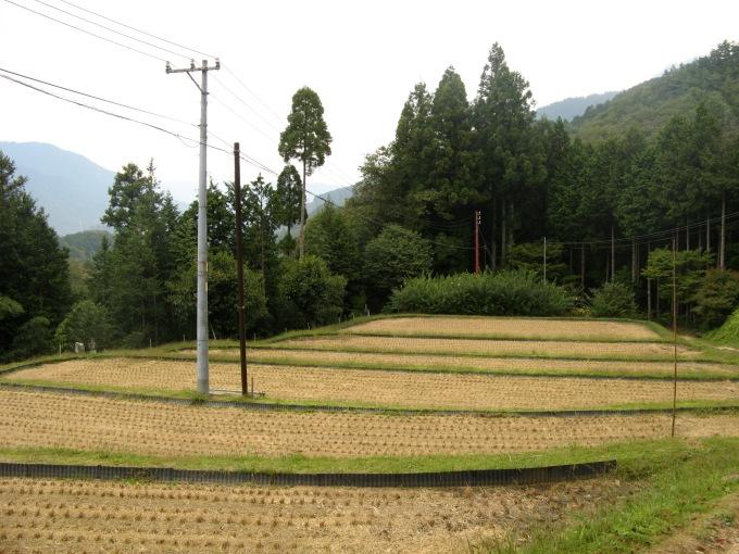 ricefieldsjapan